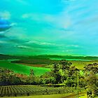 Tamar Valley Vineyards by wallarooimages