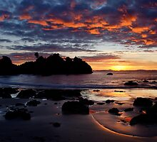 Waratah Dawn by Linda  Mullner