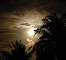 PALM SILHOUETTES IN THE MOONLIGHT by Magaret Meintjes