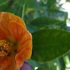 Orange! by MissA