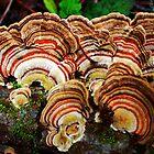 Forest Stripes II by Beatrix M Varga