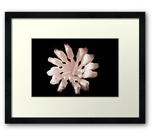 White Toothbrushes seen from above Framed Print