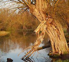 Flatford Tree (Tall) by Joe Ward