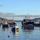 Boats in the Harbour 2014-12-24 by lynn carter