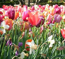 Color Wash of Tulips by mwfoster
