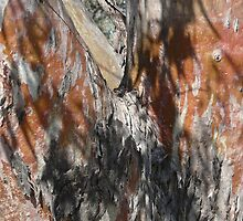 River Red Gum by JulieMahony