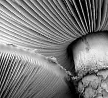 Magic Mushrooms by BlaizerB
