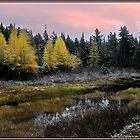 Tamarack Sunset by Wayne King