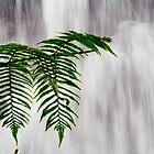 Tree Fern by Chaminda Subasinghe