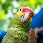 122014 parrot by pcfyi
