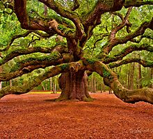 Angel Oak Arms Open Wide by Miles Moody