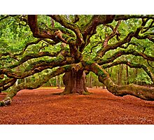 Angel Oak Arms Open Wide Photographic Print