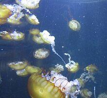 Jelly fish by BOBBYBABE