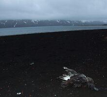 Dead Bird by John Douglas