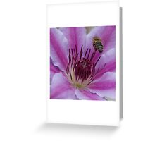 Honey Bee Landing On Nelly Moser Clematis  Greeting Card