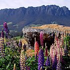 photoj Tasmania Mt Roland by photoj