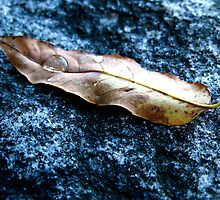 Lens On A Leaf by Alvin-San Whaley