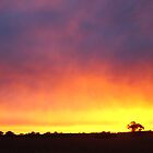 Rainbow Sunrise by bushdrover
