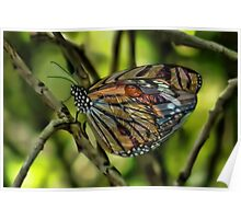 Ƹ̴Ӂ̴Ʒ A VISION WITHIN THE WINGS OF A BUTTERFLY PICTURE- PILLOWS AND OR TOTE BAG Ƹ̴Ӂ̴Ʒ Poster