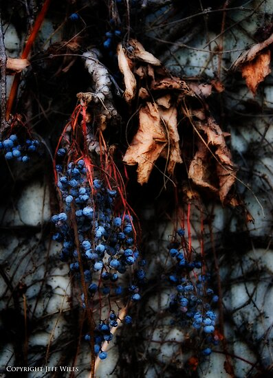 Berry, berry gone. by Jeff  Wiles