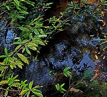 Bush Pool Reflections by George Petrovsky