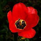 Color Me RED by © Joe  Beasley IPA