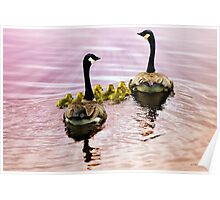 Going Home for the Night (Canada Geese) Poster