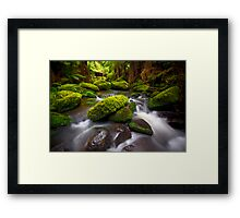 Otways Rainforest Framed Print