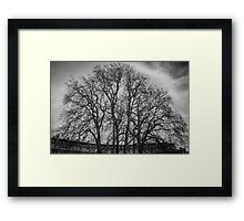 Trees in the Circus of Bath Framed Print