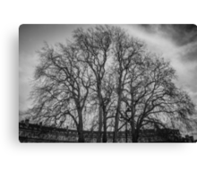 Trees in the Circus of Bath Canvas Print