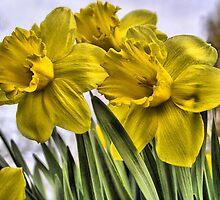 Daffodils by Annika Strömgren
