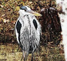 Great Blue Heron Hunting for Dinner - Watercolor Look by Cynthia Pulsifer Photography