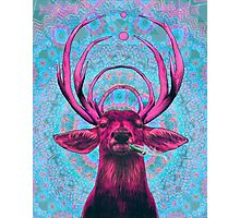 Dope Deer Photographic Print