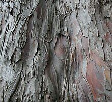 Barking Up The Wrong Tree (2) by Edward Gunn