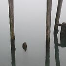 Old Piling Reflections 6 by marybedy