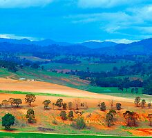 The Masters Paintbrush - Southern NSW, Australia by Philip Johnson