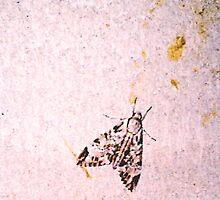 Mothy Wall by KazM