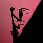 "IN SILHOUETTE - ""THE PRAYING MANTIS"" by Magaret Meintjes"