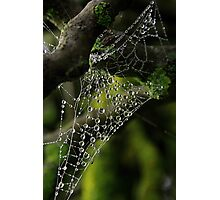 Web drops Photographic Print