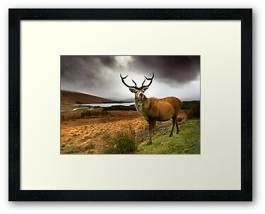 Monarch of the Glen by Angie Latham