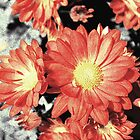 Orange daisy flowers photo art. digital drawing art style. by naturematters