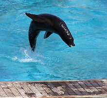 Jumping Sealion by SinaStraub