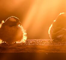 Early birds... by Qnita