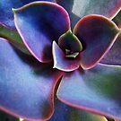 Succulent by Barbara  Brown