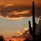 saguaro sunset by RichImage