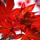 autumn fire by Cheryl Ribeiro