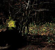 Fallen Grace by Tristan Petts