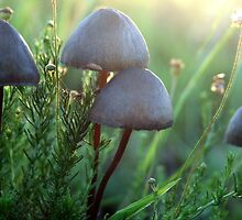 Mushrooms... Free State, South Africa by Qnita