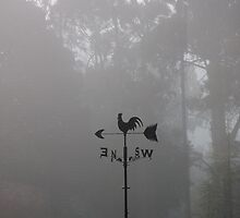 Foggy Directions by Martin Hampson