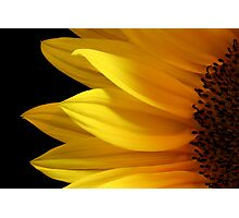 Simply Sunflower Photographic Print